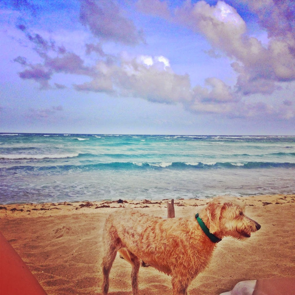 Puppy at the beach in Tulum
