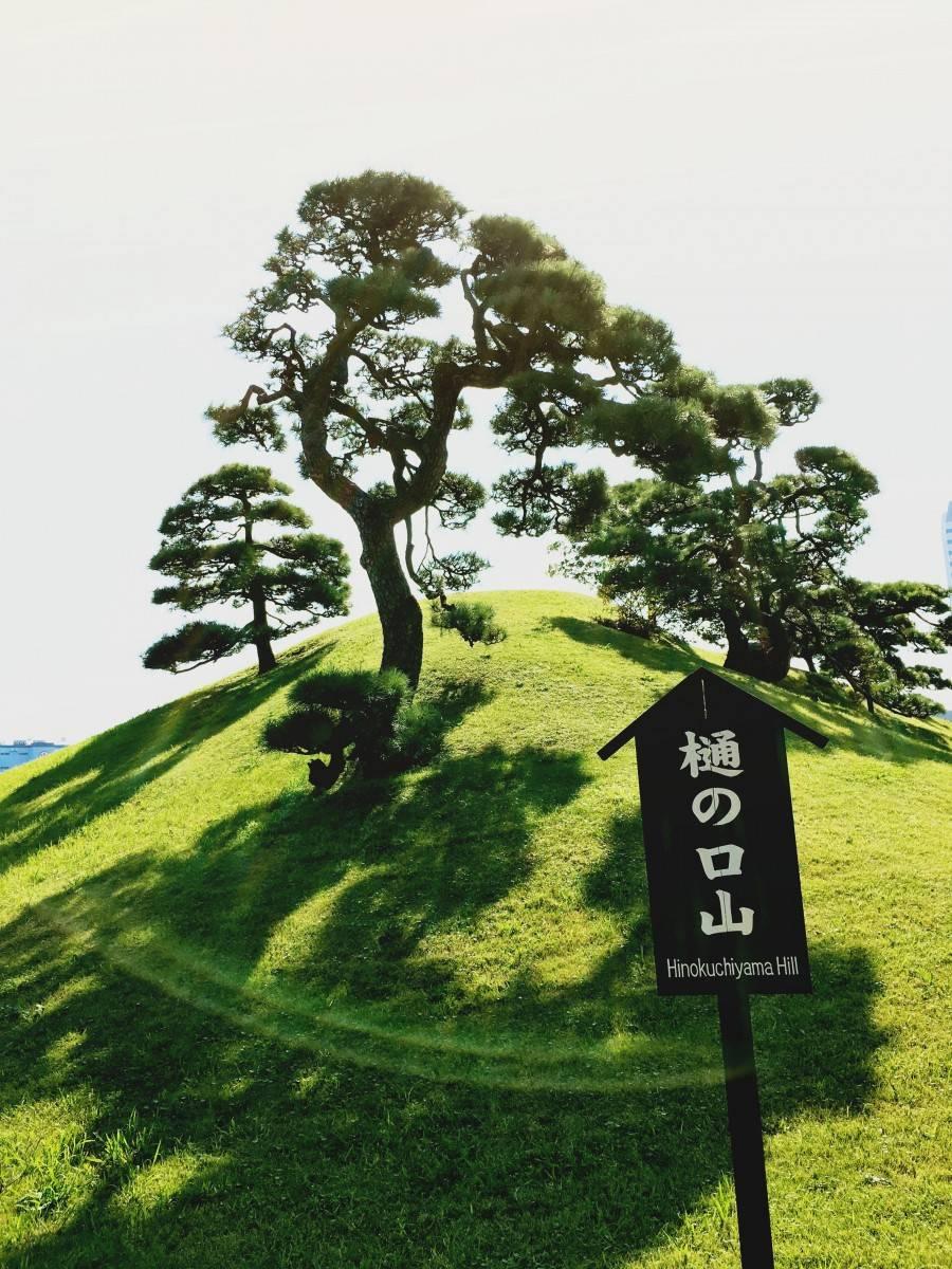Japanese tree in Hamarikyu Gardens Tokyo Japan