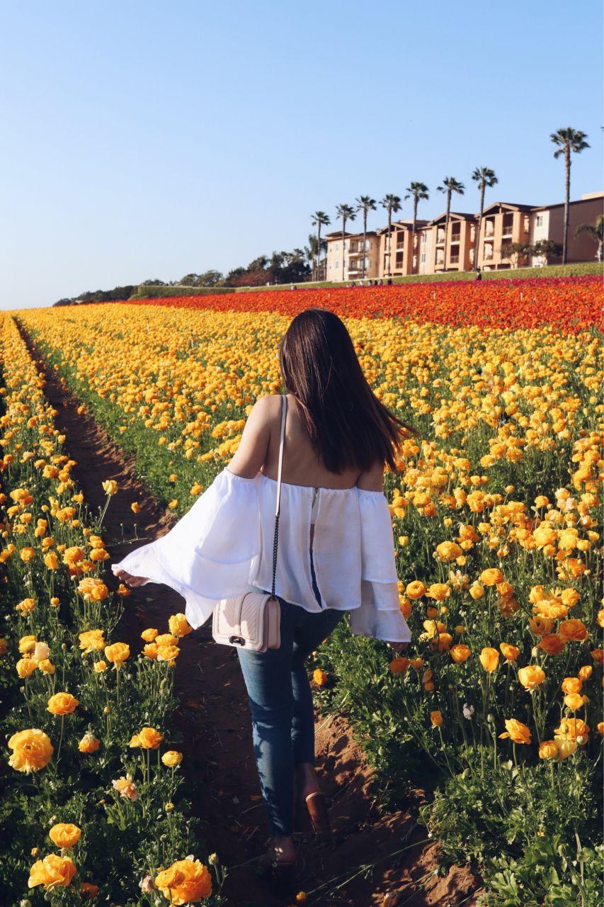 Instagram Worthy San Diego: Spring is blooming at the Carlsbad Flower Fields