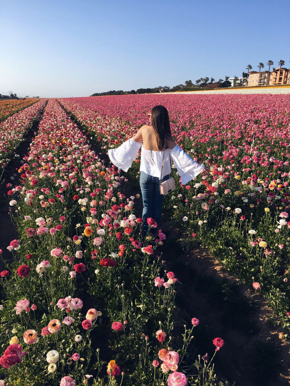A must see in San Diego: Carlsbad Flower Fields