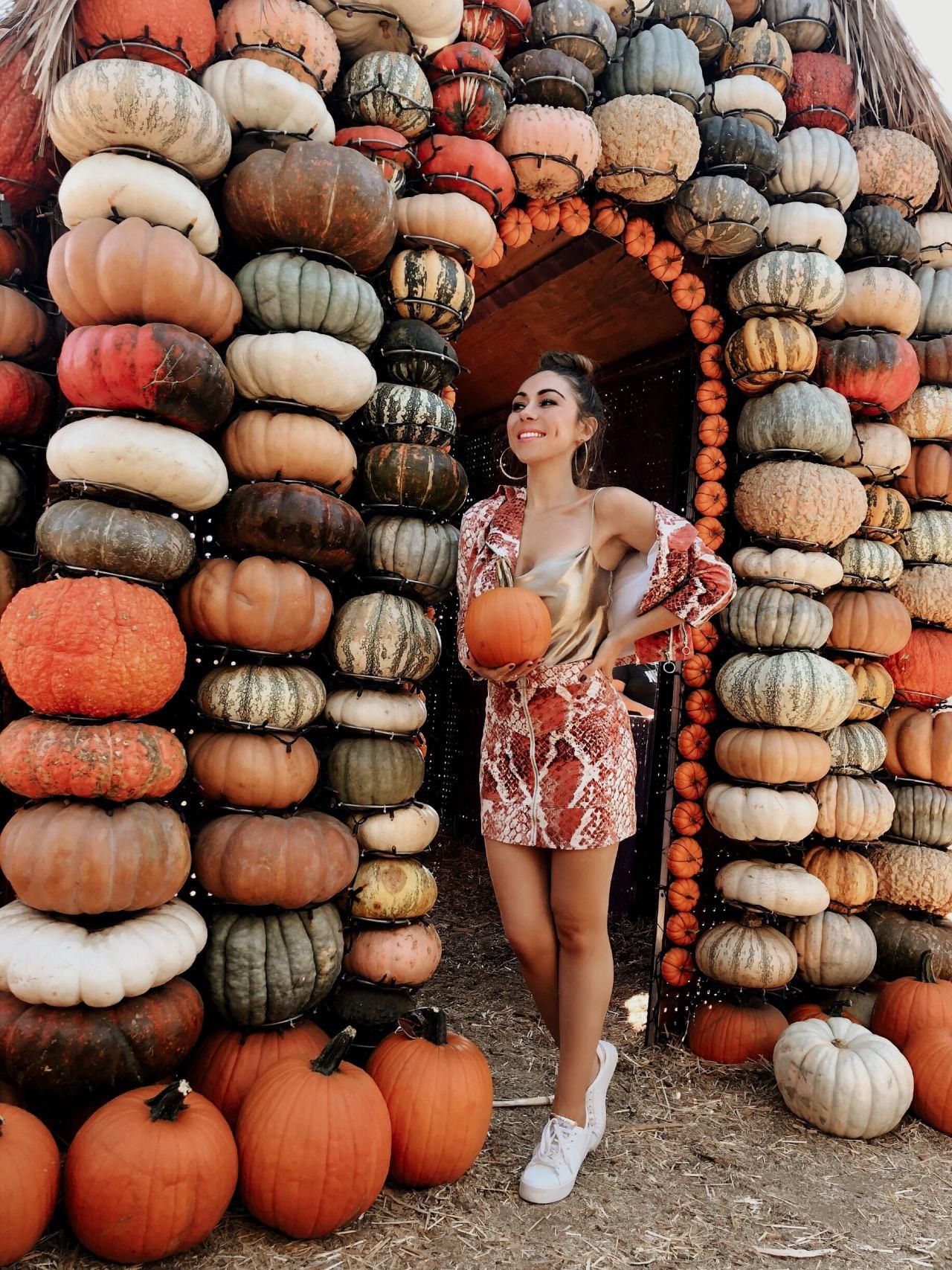 Mr Jones Pumpkin Patch Los Angeles